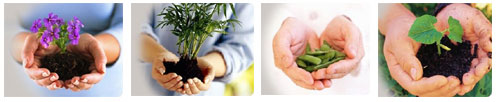 Sustainable Agro Solutions, S.A. (SAS)