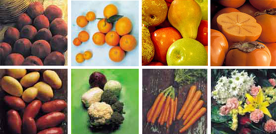 Asociación de Empresas Productoras de Frutas y Hortalizas y Exportadoras de Andalucía y Extremadura (Asociafruit)