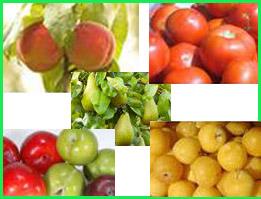 Alange Fruits, S.L. (ALANFRUITS)