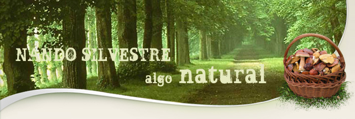 Nando Silvestre, S.L.