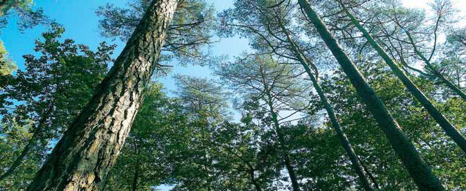 Vivre en Bois (Piveteau)