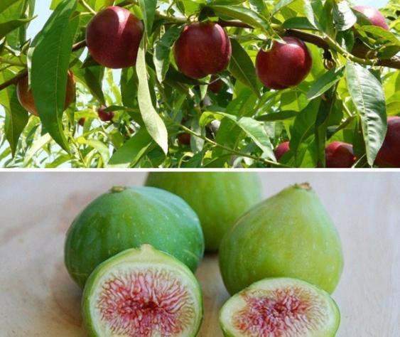 Frutas Villacruz