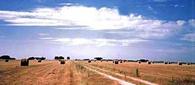Asociación de Fabricantes Exportadores de Maquinaria Agrícola de Cataluña (FEMAC)