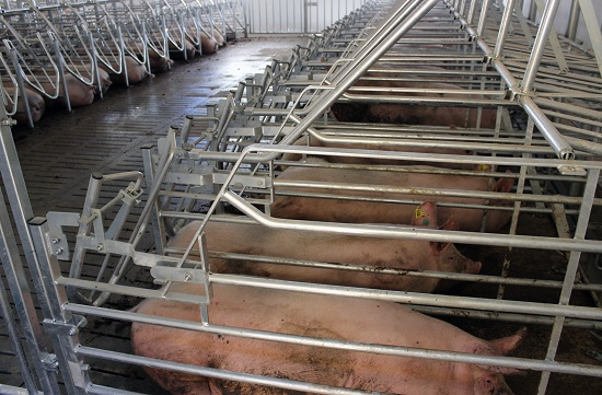 Foto de Alojamientos metálicos para porcino