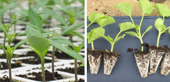 Foto de Recubridores de semillas