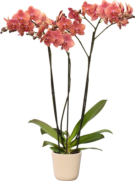 Foto de Orquídeas