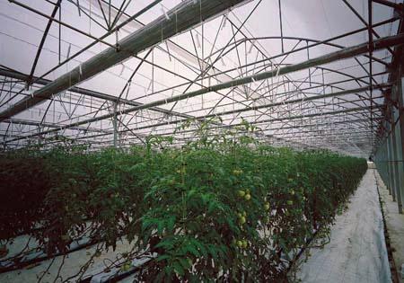 Foto de Invernaderos para horticultura