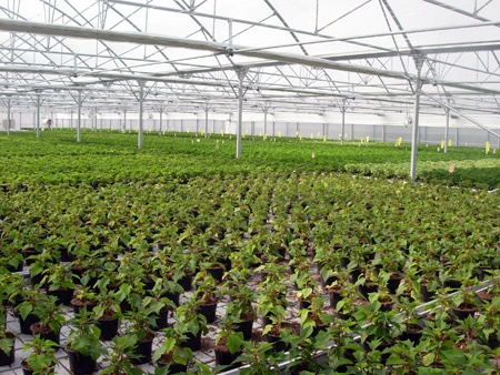 Foto de Invernaderos para floricultura