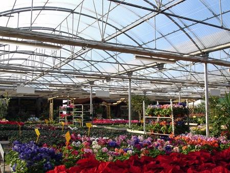 Foto de Invernaderos para centros de jardinería