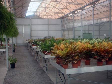 Foto de Mesas de cultivo para invernaderos