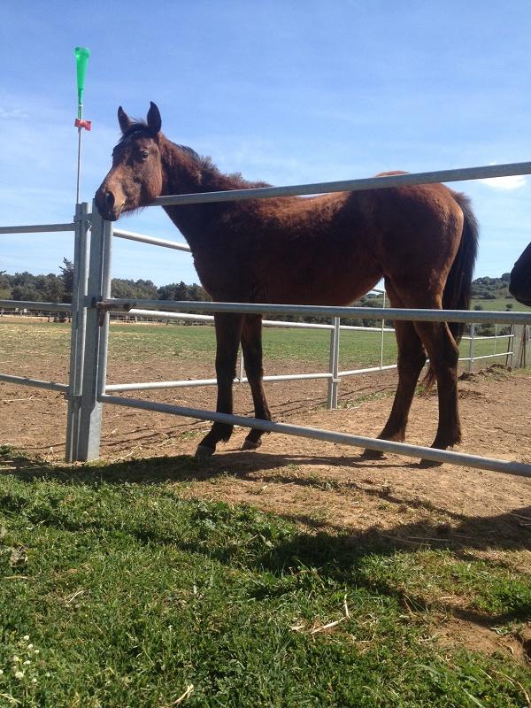 Foto de Cancillas para caballos