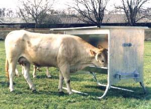 Foto de Bebederos para bovinos grandes