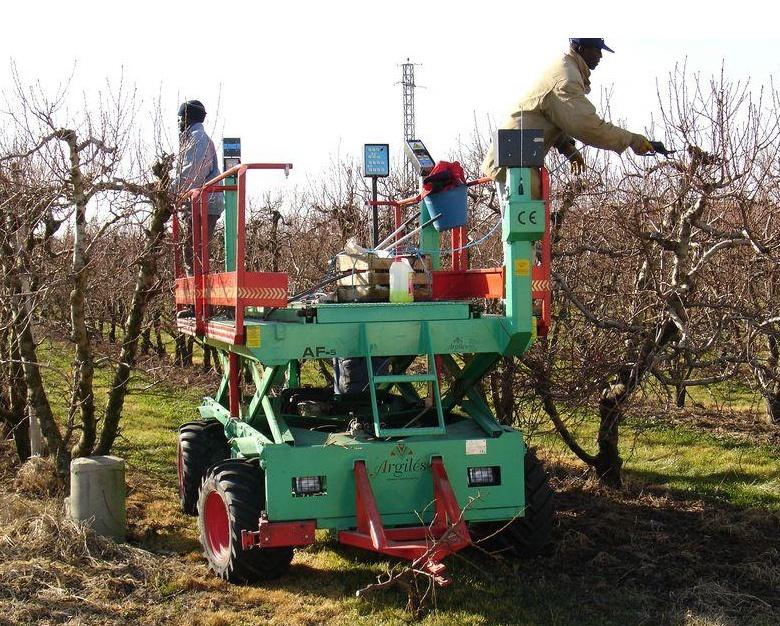 Foto de Recolectores de frutas