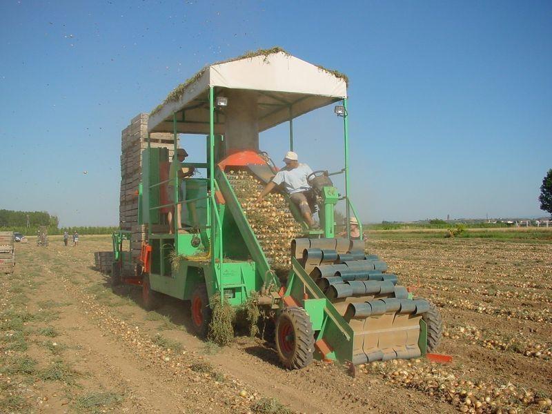 Foto de Recogedoras de cebolla y patata autopropulsadas