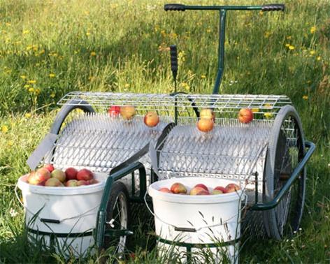 Foto de Recolectoras de frutos del suelo