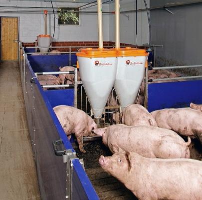 Foto de Corrales para grupos de cerdos