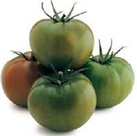 Foto de Semillas de tomate