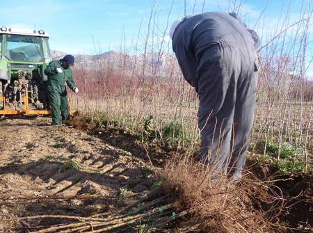 Foto de Servicios agrícolas, forestales y asesoría técnica ambiental