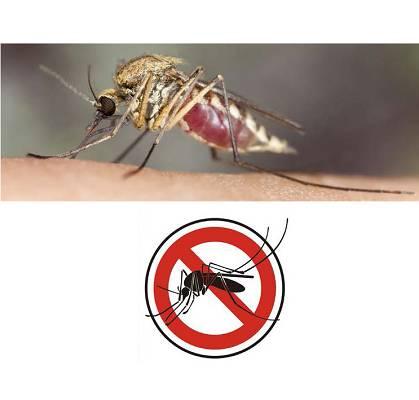 Foto de Recubrimientos repelentes de insectos