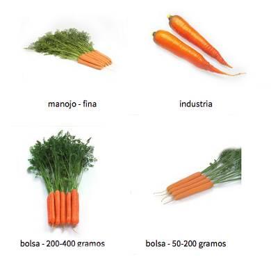 Foto de Semillas de zanahoria