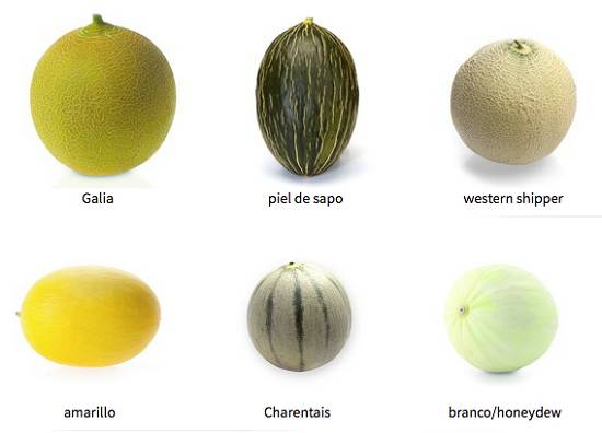 Foto de Semillas de melón