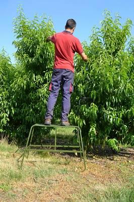 Foto de Escaleras trineo fija para cosecha
