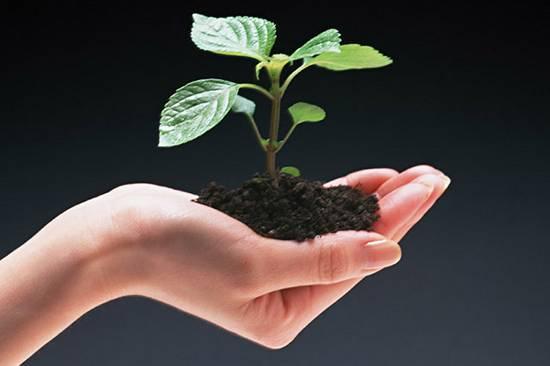 Foto de Medio Ambiente en la Empresa. Gestión ambiental y de residuos