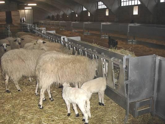 Foto de Comederos para ovino-caprino