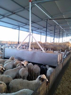 Foto de Tolvas para corderos y ovejas