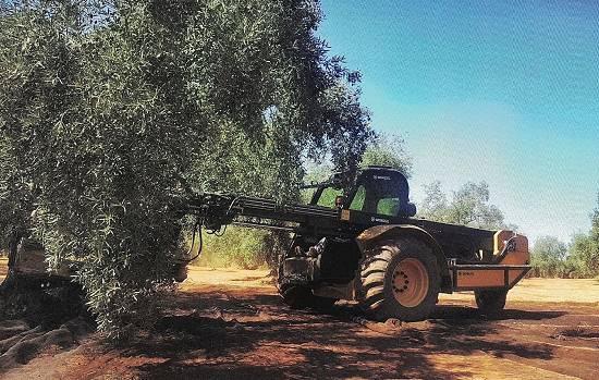 Foto de Buggy para recolección de aceitunas y frutos secos