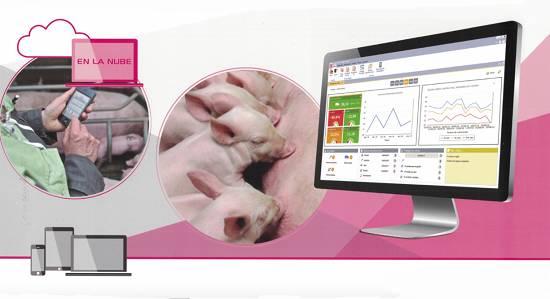 Foto de Solución informática para explotaciones porcinas