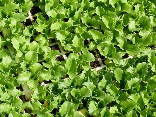 Foto de Sustratos para semillero