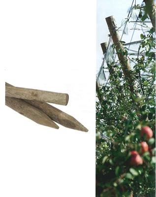 Foto de Estacas y postes de pino