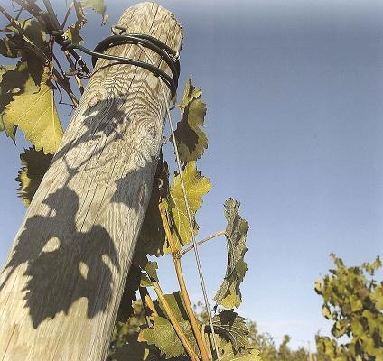 Foto de Estacas y tutores de pino