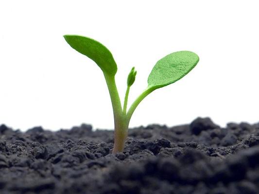 Foto de Abono ecológico potenciador de fertilizantes convencionales