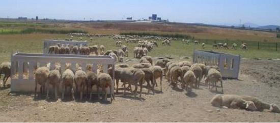 Foto de Comedero para ovino