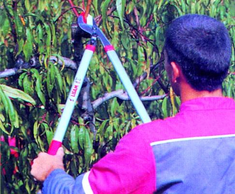 Foto de Tijera cortadora de ramas