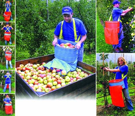 Foto de Recolectores de fruta