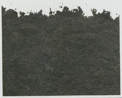 Foto de Compost vegetal