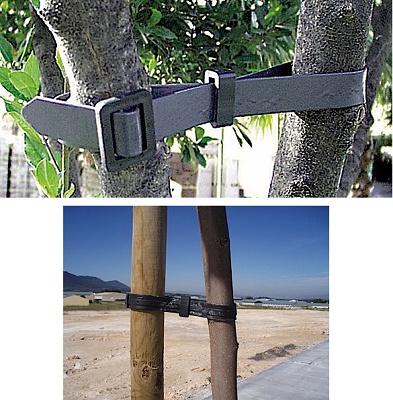 Foto de Cinturones para árboles