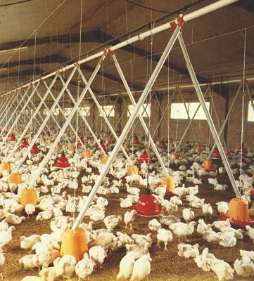 Foto de Transporte de alimento para aves