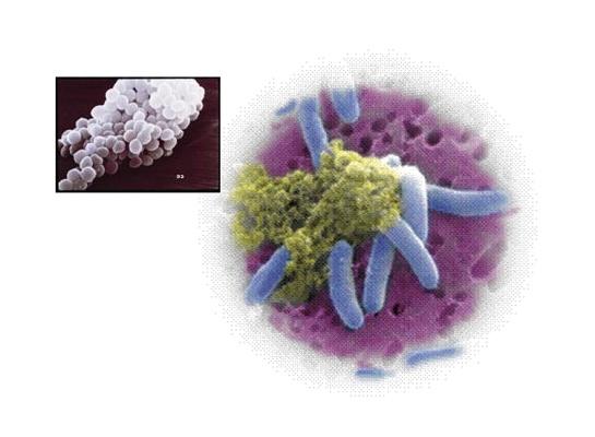Foto de Biocidas orgánicos
