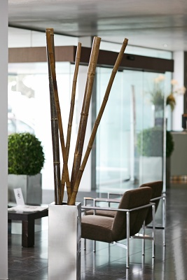Foto de Tutores de bambú decorativos