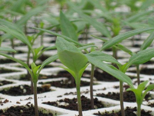 Foto de Recubridor de semillas