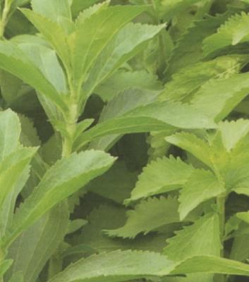 Foto de Plantas aromáticas