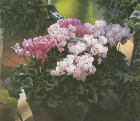 Foto de Plantas para otoño/invierno