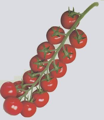 Foto de Semillas de tomate Cherry Redondo