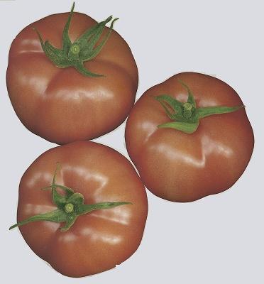 Foto de Semillas de tomate Beef