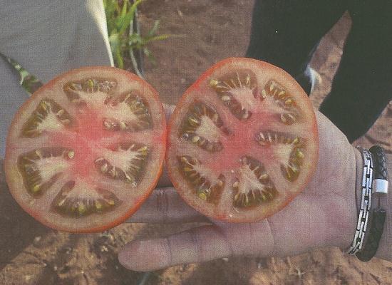 Foto de Semillas de tomate determinado redondo