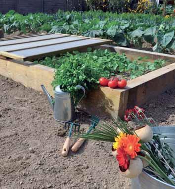 Foto de Cubierta para semillero